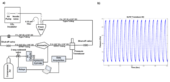 A Flow Perfusion Bioreactor With Controlled Mechanical Stimulation  Application In Cartilage